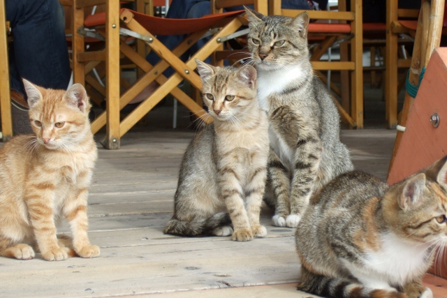Photo by Margie Miklas Amalfi  Coast cats