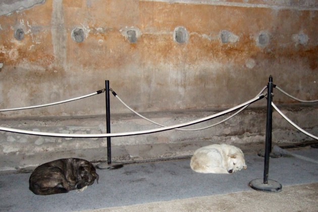 Stray dogs sleeping in Pompei ruins Photo by Margie Miklas