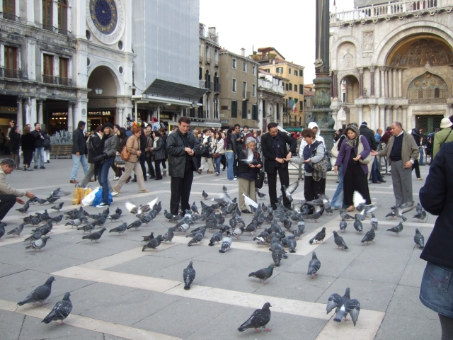 Feeding pigeons in St Mark's Square - Venice