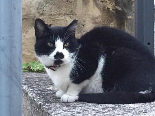 Tuxedo cat in Matera ~ Photo by Margie Miklas