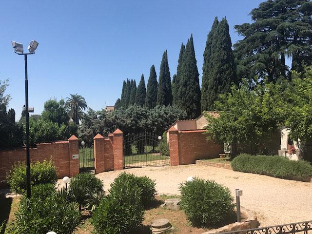 Rome cypress photo by Margie Miklas